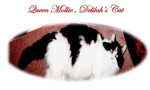 Queen Mollie, Delilah's Cat