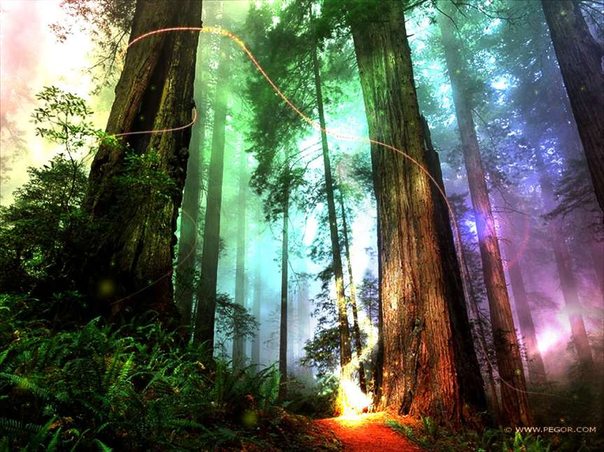 magical-forest_1024x786