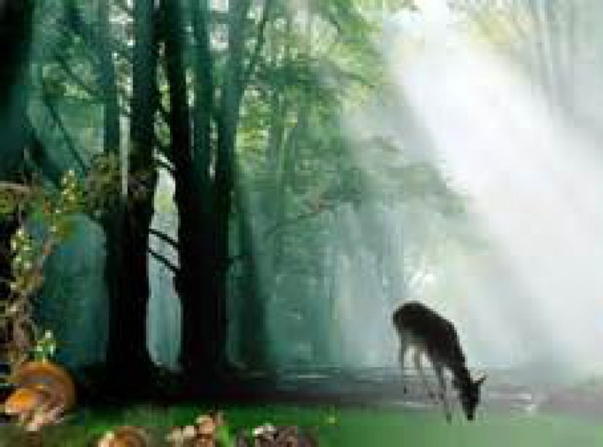 cropped-deer-in-forest.jpg